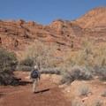 Hiking the Red Reef East Trail.- Anasazi Trail to Red Reef East Loop