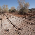 This was one large creature.- Anasazi Trail to Red Reef East Loop