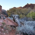 A large dead tree that sure looks like a sleeping elephant.- Red Cliffs Nature Trail