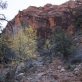 Red Cliffs Nature Trail.- Red Cliffs Nature Trail
