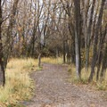 The trail becomes dirt as you enter the trees.- Saratoga Hot Spring