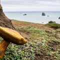 Mushroom clinging to the cliff.- Blacklock Point Hike
