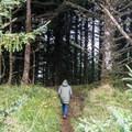 Headed back into the deep woods.- Blacklock Point Hike
