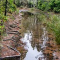 Many spots on this trail are flooded.- Blacklock Point Hike