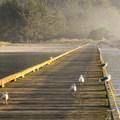 Seagulls are constant companions while crabbing.- Winchester Bay Crabbing