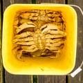 A good catch.- Winchester Bay Crabbing
