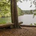 One of many resting benches along the trail.- Eel Lake Trail Hike