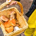 Mushroom hunting is a popular activity around the campground.- Honeyman State Park Campground