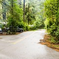 Typical campground road.- Honeyman State Park Campground