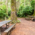 Hiker/biker campsites are very private.- Honeyman State Park Campground