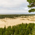Looking west from the day use overlook.- Oregon Dunes Day Use Area
