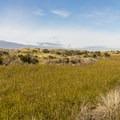 The vegetation between the dunes is quite varied.- Oregon Dunes Loop Hike