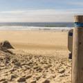 At last--the beach!- Oregon Dunes Loop Hike