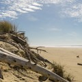 The hike along the beach is marvelous.- Oregon Dunes Loop Hike