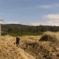 Beginning the trek back into the dunes.- Oregon Dunes Loop Hike