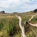 Driftwood is abundant on the trail. - River Trail Hike