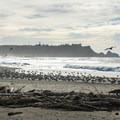 Shore birds in abundance.- River Trail Hike