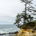 Coastal trees clinging to the cliffs.- Shore Acres Loop Trail