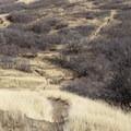 Dry, loose doubletrack below Squaw Peak Overlook.- Squaw Peak Loop
