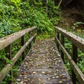 One of many bridges in the reserve.- South Slough Loop Hike