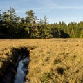 South Slough Reserve.- South Slough Loop Hike