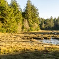 Late afternoon light on the reserve.- South Slough Loop Hike
