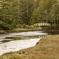 Rhodes Marsh.- South Slough Loop Hike
