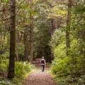 Returning via the Railroad Trail.- South Slough Loop Hike