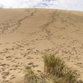 Climbing the dunes along the Hall and Shuttpelz Lake Trail.- Hall + Shuttpelz Lake Trail