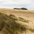 Beachgrass and footsteps along the Hall and Shuttpelz Lake Trail.- Hall + Shuttpelz Lake Trail