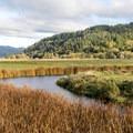The meadows of Dean Creek.- Dean Creek Elk Viewing Area