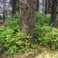 Trailhead to the lighthouse.- Cape Blanco State Park Campground