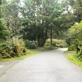Campground road.- Cape Blanco State Park Campground