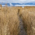 A narrow trail leads to Utah Lake.- Saratoga Hot Spring
