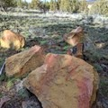 Striking red and orange rocks are scattered along the path.- Rimrock Springs Wildlife Management Area