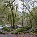 Moss covered rocks around Lake Creek.- Lake Creek Falls Recreation Site
