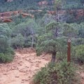There are arrow signs throughout the trail to help navigate.- Devils Bridge