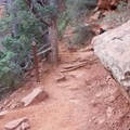 Make sure to follow the trail arrows as there are a few footpaths that intersect with the Devils Bridge Trail. - Devils Bridge