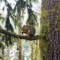 Squirrel perched up on a tree branch.- Maple Glade Rain Forest Trail