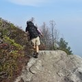 At the top, the vegetation is reduced to shrubs and stunted trees.- Table Rock near the Linville Gorge Wilderness