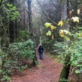 The shore trail starts out in the deep forest- Cape Blanco Shore Trail