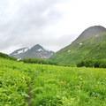 Wildflowers in Raven Creek Valley.- Crow Pass Trail Thru-Hike