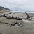 Driftwood along the Cape Blanco Beach.- Cape Blanco State Park
