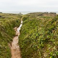 This narrow trail leads out to the point.- Otter Point State Recreation Site