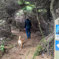 This segment of the Oregon Coast Trail leads down to the beach.- Otter Point State Recreation Site