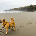 Lots of room to run on this beach.- Otter Point State Recreation Site