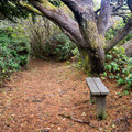 Restful spot along the trail.- Otter Point State Recreation Site