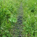 Treads help protect the fragile meadow from foot traffic.- Williwaw Lakes + Mount Elliot Scramble
