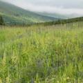 Lush field along the Williwaw Lakes Trail.- Williwaw Lakes + Mount Elliot Scramble