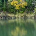A bit of fall color on the river.- Quosatana Campground